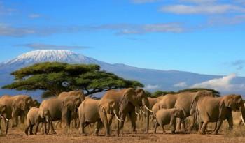 Килиманджаро Танзания